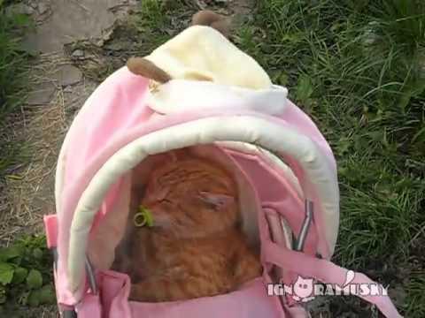 されるがまま・・・。おしゃぶりを加えてベビーカーでウトウトする猫