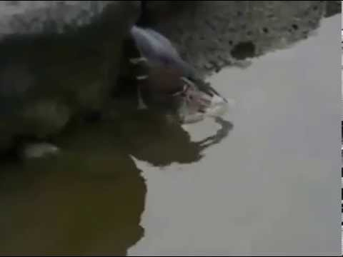 Mp4 Heron  Baiting    Xxx video