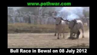 Bull Race Bewal Gujar Khan 08 July 2012