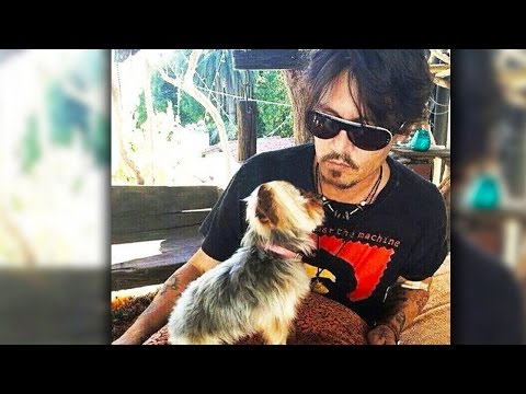 Johnny Depp's Dogs Face Death in Australia