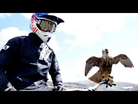 Peregrine falcon hunts downhill rider (with Red Bull channel) - Earth Unplugged