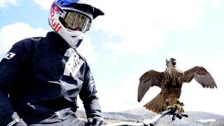 Peregrine falcon hunts downhill rider (with Red Bull channel) | Earth Unplugged