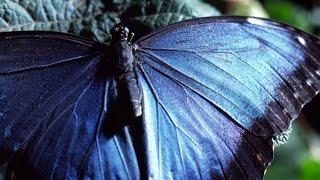 Tecnología Natural Episodio 1(uno) - La Magia del Movimiento - Los Secretos de la Naturaleza