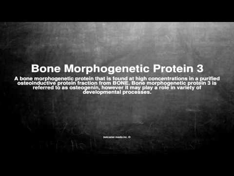 Medical vocabulary: What does Bone Morphogenetic Protein 3 mean
