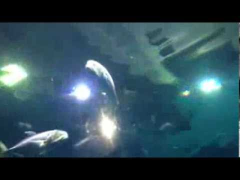 Scary Shark Tank  in Las Vegas Mandalay Bay Hotel Aquarium