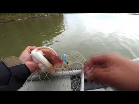 рыбалка на оби сазан видео