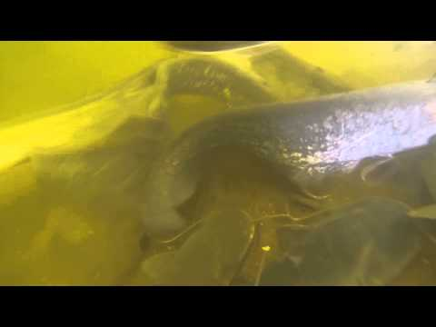 подводная рыбалка ока