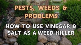 How to Use Vinegar & Salt as a Weed Killer
