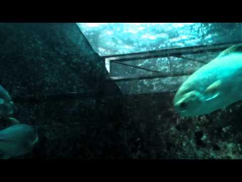 Underwater world Langkawi Malaysia