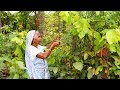 Kumal Ki Aga (Kumal Stem) unknown & Rare Village Food Recipe by our Grandmother | Indian Food MP3