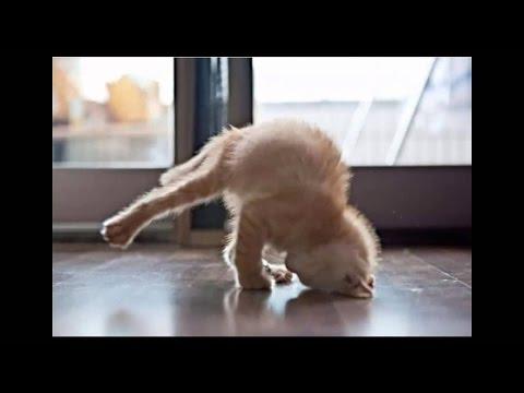 приколы видео кошки# просто обхохочешься