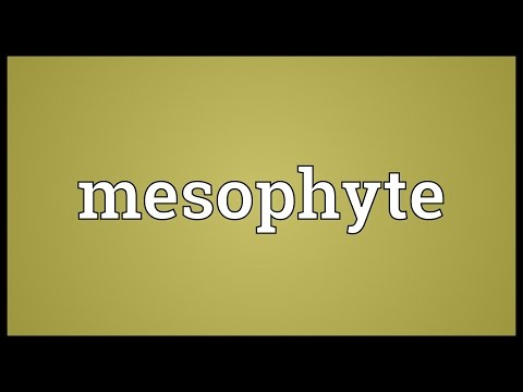 Header of mesophyte