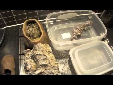 how to make a leopard gecko laying box youtube. Black Bedroom Furniture Sets. Home Design Ideas