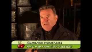Alara Fidan A.Ş.Meyve Fidanları Tanıtımı
