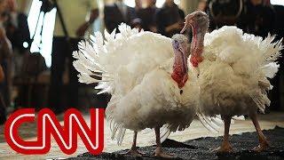 Trump pardons Drumstick the turkey
