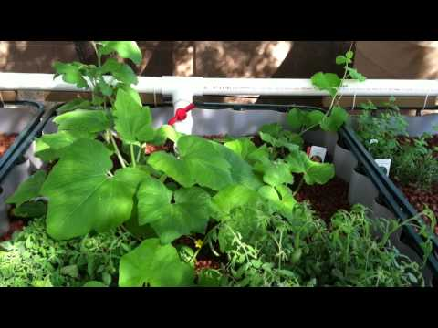 Nitrification for Arizona aquaponics