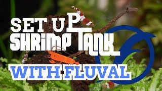 How to Set Up Shrimp Tank with FLUVAL® product