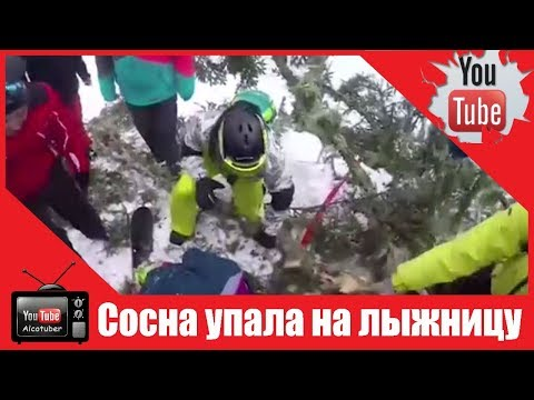 Падение 20 метровой сосны на лыжницу в Сочи сняла камера GoPro