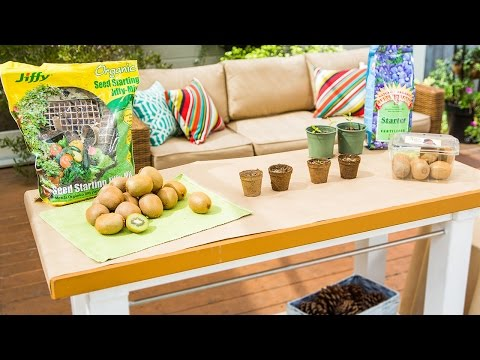 Home & Family - Turning Store Bought Kiwi into beautiful Kiwi Vines