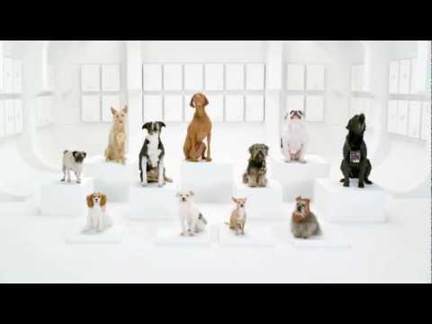 Собачий хор исполняет тему из звездных воин