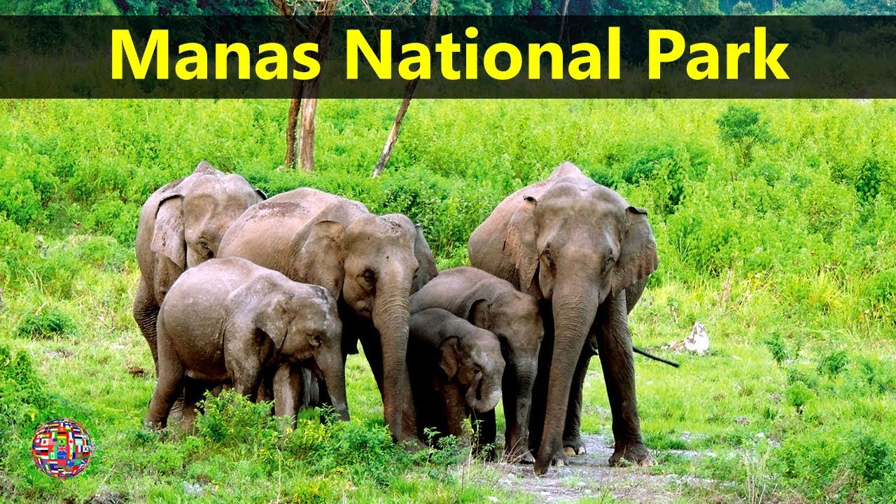 manas national park india Manas national park wildlife safari tour - 3 days tour to manas national park, one of the most beautiful national parks in india for its pristine wild habitat.