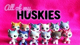All of My LPS Huskies!