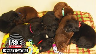 8 Puppies Found in Wisconsin Dumpster Are Named After Cheese