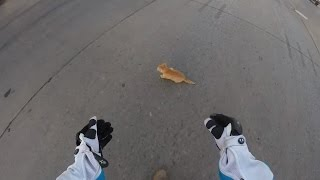 Watch a Motorcyclist Rescue Frightened Kitten from Busy Intersection