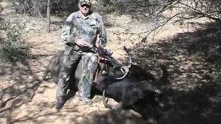 African Cape Buffalo with a Kodabow Crossbow