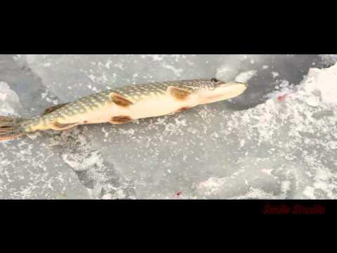 прогноз клева на сиверском озере