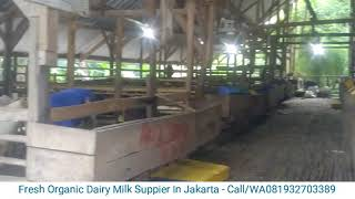 Fresh Dairy Milk Jakarta - Susu Segar Murni Jakarta