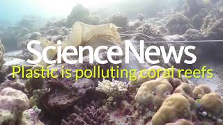 Plastic is polluting coral reefs | Science News