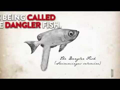 Penis Fish