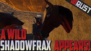 A Wild Shadowfrax Appears! - Rust