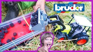 Tractor Videos For Kids | First Wild Blackberries!