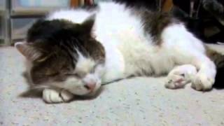 Really Cute Cat Sings The Blues
