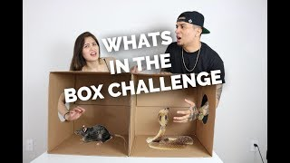 WHATS IN THE BOX CHALLENGE (GIRLFRIEND FREAKS OUT)