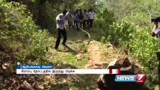 Man catches two highly venomous king cobra snakes in bare hands | News7 Tamil