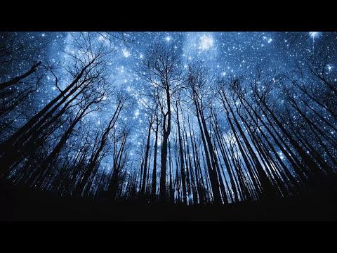 Bosques mas hermosos del planeta - HD