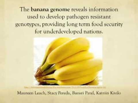 Banana Genome Reveals Information About its Evolution and Genes