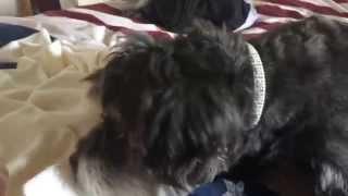 O Cachorro Sobe Na Cama Enquanto O Beb� Dorme: O Que Ele Faz � Incr�vel!