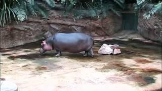 Auf grosser Tour durch den Koelner Zoo 1