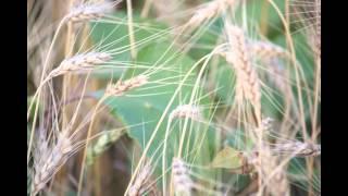 Grupul Emanuel Canada - La tine vin Doamne Vol-5