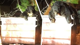 Deputies Carefully Help Bear Get Unstuck From Dumpster