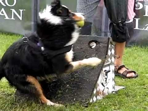 FLYBALL Tournament