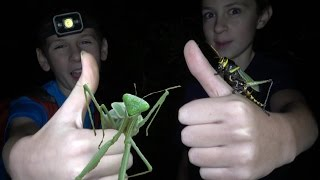 4K Grasshopper Punches & Ninja Mantis Moves: Where All Those Bugs Come From? Fun Travel Nature
