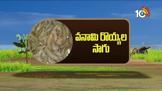 Vannamei Prawns Cultivation Profits 2018 | Matti Manishi | 10Tv