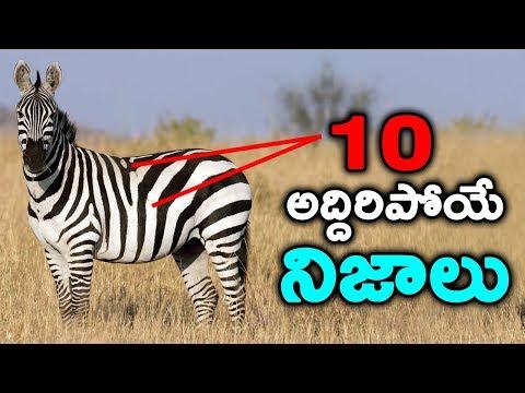 interesting facts in Telugu || T Talks