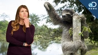 What Were Ancient Sloths Like?