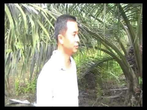 Bio Fertilizer for Oil Palm in Ayer Hitam, Malaysia